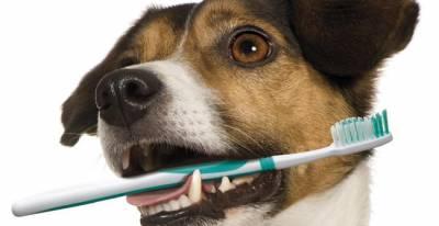 Copia de Abcessos Dentários