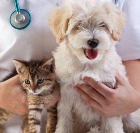 Castração de Cães e Gatos