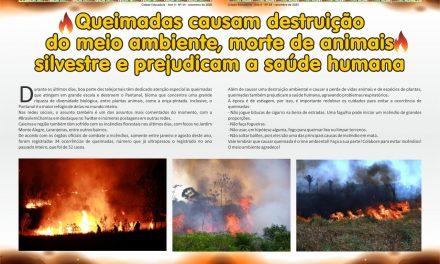 Queimadas causam destruição do meio ambiente, morte de animais silvestre e prejudicam a saúde humana